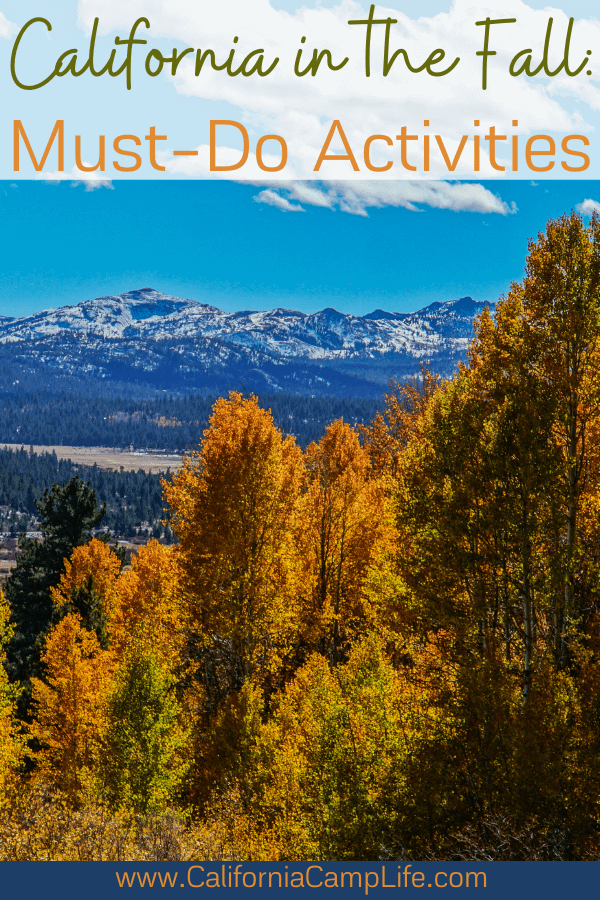 Fall tress with mountains in the distance